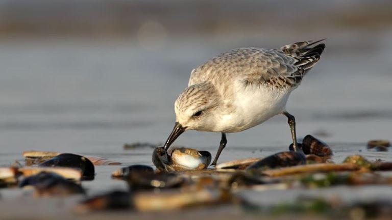 Bird spotting at Hayle Estuary