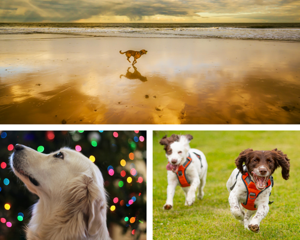 Trio of images showing dogs enjoying a dog friendly Christmas and New Year holiday