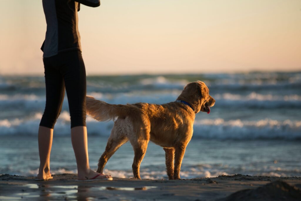 Dog on the beach during sunset in St Ives, Cornwall