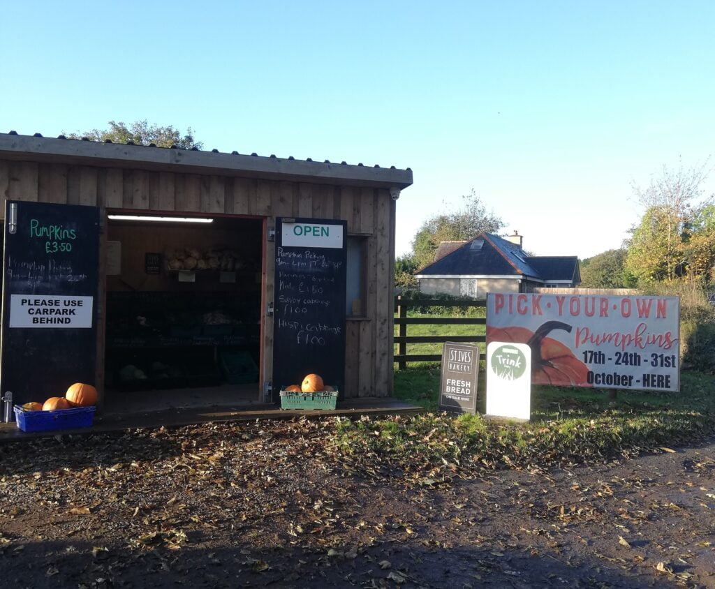Half term pumpkin picking near Polmanter Touring Park St Ives